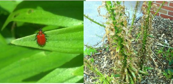 bug on leaf, tall grass