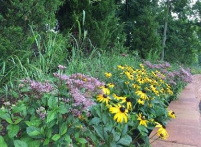 flowers and tall grass in sustainable landscape
